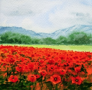 Red_Poppy_Field